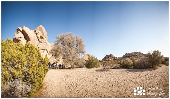 Live Oak Panorama - Wedding Details - Joshua Tree California Elopment
