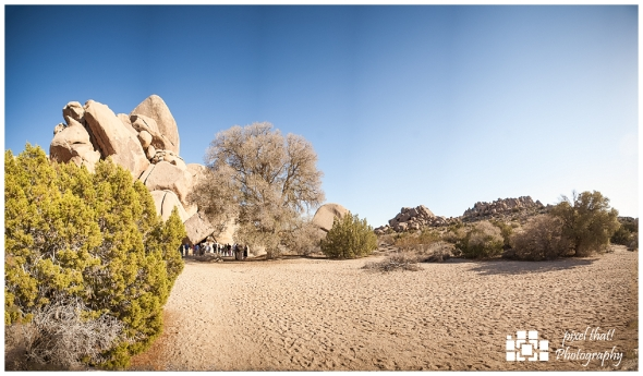 Live Oak Panorama - Wedding Details - Joshua Tree California Elopment