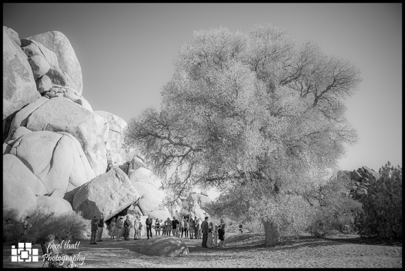 Live Oak - Wedding Details - Joshua Tree California Elopment